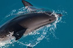 delphin nov2020