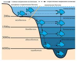 Пути заселения рыбами океанических биотопов