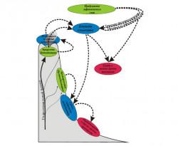 Схема трофическихцепей нанобиоты нагидротермальномполе Лост Сити