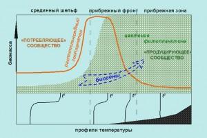 Формирование «локального культиватора» планктона